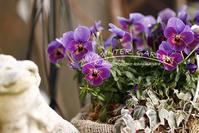 1月終わりの庭の花 と 夫婦って - 季節の風を感じながら・・・