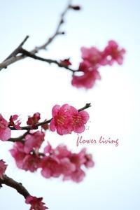梅 と 和菓子 - flower living