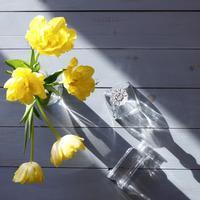 Tulip ☆ - Photo koaniani