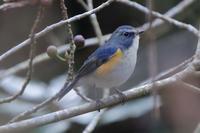 新春 近所詣 - 野鳥写真日記 自分用アーカイブズ