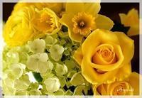 お花のチカラ - Arys style  「整える」くらし