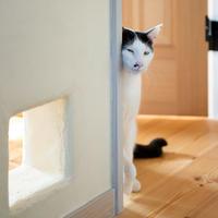 三年遅れの猫日記-26- - 猫と夕焼け