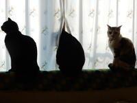 誰も知らないドラマの話などをしてみる - 愛犬家の猫日記