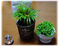 ◆100均のミニ観葉植物と猫と・・・千枚漬け出来上がり(^-^)(自由部門) - ☆彡ちいさな幸せ☆彡別館
