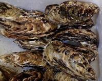 浦村の牡蠣、届きました - えんがわ