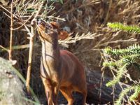 埼玉県こども動物自然公園 1月28日 - お散歩ふぉと