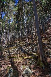 檜原村の滝訪問 - デジカメ写真集