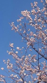 今日の撮って出し!梅は咲いたか2017 - デハ712のデジカメ日記2017