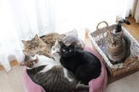 5猫だんごが見たいな~ - きょうだい猫と仲良し暮らし