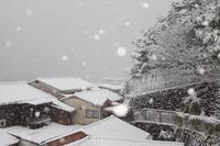雪の宮島 広島旅行 - 11 - - うろ子とカメラ。