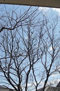 雀のなる木 と 別れぎわの微笑み(くらし部門) - グルグルつばめ食堂