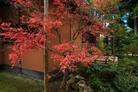 京都の紅葉2016 修学院離宮(中離宮編) - 花景色-K.W.C. PhotoBlog