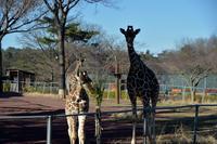 頭にハート - 動物園へ行こう