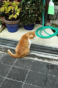 長谷寺の参道で出会った動物 - 平凡な日々の中で