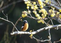 公園散歩 - 写真で綴る野鳥ごよみ