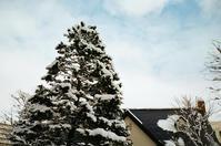 冬の空と息子の手術見舞い - 照片画廊