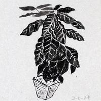 1月下旬 - たなかきょおこ-旅する絵描きの絵日記/Kyoko Tanaka Illustrated Diary
