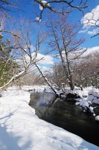 冬の戦場ヶ原-9 - 自然と仲良くなれたらいいな2