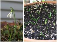 2017年2月 我が家の植物たち - 空を見上げて フィスと一緒にくつろぐ日々