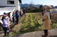 12月19日 3年生大豆の収穫 - 東川登小ニュース