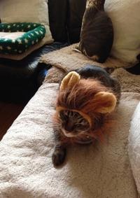《トラちゃん占いは毎月1日》2月5日地震体感と検証 - 猫丸ねずみの大荒れトーク
