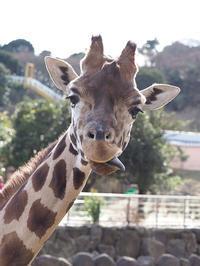 2月2日(木) Smile - ほのぼの動物写真日記
