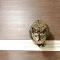 2人のレディ - 賃貸ネコ暮らし|賃貸住宅でネコを室内飼いする工夫