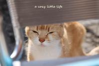 まぶし~い ネオくん - a cozy little life