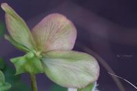 冬の花 - My diary