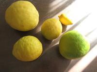 ジャンボレモンを使って - 光さんの日常