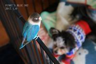 B.B & Chipo* とうとう、 (動物・ペット部門) - FUNKY'S BLUE SKY