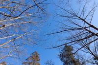 冬の鳥 - 彩りの軌跡