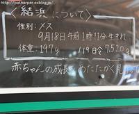 2017年1月 白浜パンダ見隊 その4(2日め) 119日齢結ちゃん体重測定 - ハープの徒然草