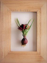 原種のチューリップでボタニカルアート風写真 (写真部門) - Little hobby