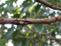 越冬中の昆虫たち - あれも見たいこれも見たい