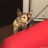 困り顔のがんばり - 賃貸ネコ暮らし|賃貸住宅でネコを室内飼いする工夫