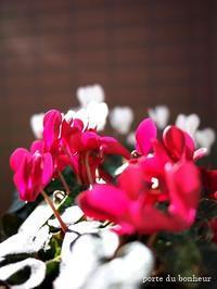 春の息吹 - A partir d'une seule piece  カルトナージュで私だけの空間創り