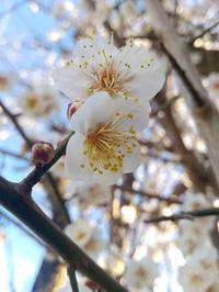 スギ花粉シーズン到来。 - 三日坊主25。