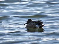 宍道湖西岸の鳥① - 清治の花便り