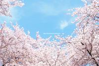 待ち遠しい風景2 - jumhina biyori*