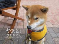 ハナパク - yamatoのひとりごと