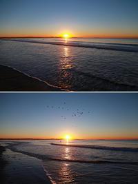 2017/02/03(FRI) 穏やかな海に水鳥が羽休め........。 - SURF RESEARCH