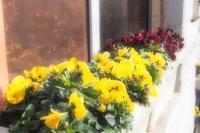 春の声 - my Photo blog