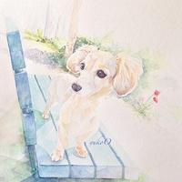 ノンノン - 犬の絵、描きます <Eyes of a Dog>