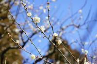 早春の神代植物公園~①梅前半 - 柳に雪折れなし!Ⅱ
