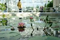 早春の神代植物公園~⑤温室からラスト - 柳に雪折れなし!Ⅱ