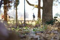 早春の神代植物公園~④園内の風景 - 柳に雪折れなし!Ⅱ