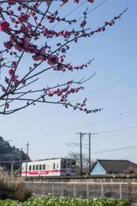 春近し - ぷち鉄