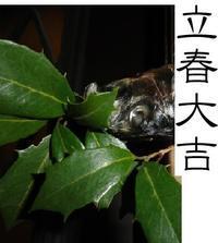 春立つ - 玉響記=たまゆらのき=