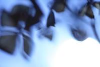 光差す - 写真の記憶